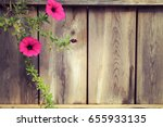 Branch Of Pink Petunia With...