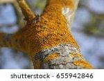 Closeup Of A Tree Bark Texture...