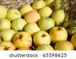 Harvest apple background - stock photo