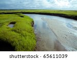 Wetlands Of Cape Cod In The...