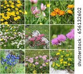 Small photo of Alps Flora collage, Series 3: from top left: rock rose, alpine clover, golden Hawk's-beard, red clover, Alps rose, scabiosa columbaria, Gentiana verna, Alpine aster, bird's-foot trefoil)