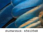 Blue Parrot Feathers Texture