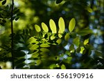 leaves   leaves silhouette