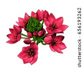 agave red flowers buds sketch... | Shutterstock .eps vector #656193262