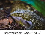 Close Up Of A Lizard Among...