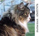 cat | Shutterstock . vector #656357476