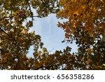 Autumn Leaves Turning Vibrant...