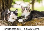 Stock photo two cute cats lying on the tree pair kitten on a branch partner tabby on a natural green 656399296