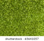 Moss Background   Fresh Green...