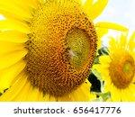 Bee On Sunflower. Flower Of...