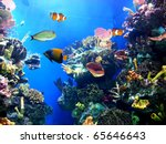 Colorful Aquarium  Showing...