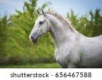 portrait of lipizzaner horse | Shutterstock . vector #656467588