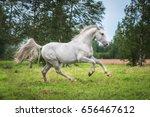 beautiful lipizzaner stallion... | Shutterstock . vector #656467612