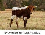 young texas longhorn cow posing ... | Shutterstock . vector #656492032