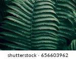 Beautiful Fern Leaves Green...