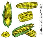 corn hand drawn vector... | Shutterstock .eps vector #656628472