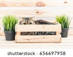 young persian cat in wooden box | Shutterstock . vector #656697958