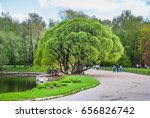 "Small photo of Moscow, Russia - April 30, 2012: The main Botanical garden named Tsitsin of the Russian Academy of Sciences in Moscow. Brittle willow ""Bullata"" (Salix fragilis Bullata). Spring landscape"