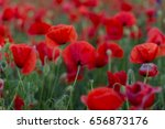 flowers red poppies blossom on... | Shutterstock . vector #656873176
