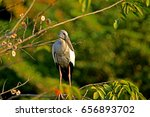 Heron On Branch In Nature ...