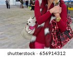 woman walks with chihuahua dog... | Shutterstock . vector #656914312