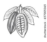 monochrome cocoa beans and... | Shutterstock .eps vector #657005365