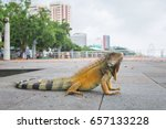 iguana on the malecon of guayas ... | Shutterstock . vector #657133228