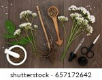 valerian herb root and flowers... | Shutterstock . vector #657172642