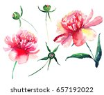 set of a delicate tender cute... | Shutterstock . vector #657192022