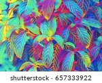 tropical foliage plant digital... | Shutterstock . vector #657333922