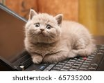 Stock photo close up little british lilac kitten lying on a laptop 65735200