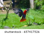 flying red parrot in a tropical ... | Shutterstock . vector #657417526