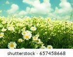 daisies  wildflowers | Shutterstock . vector #657458668
