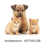 Stock photo kittens and puppy isolated on a white background 657541138