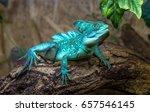Basiliscus Basiliscus Sits On A ...