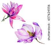 wildflower magnolia flower in a ... | Shutterstock . vector #657624556