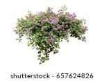 purple flower lily vine  bush... | Shutterstock . vector #657624826