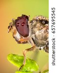 Macro Focus Stacking   Hover...