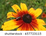 Flower With Bugs