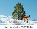 A small herd of horses huddle near an evergreen tree in the middle of winter.