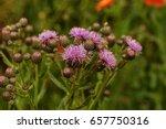 Beautiful Flower Of Purple...