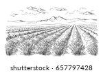 lavender field summer sunset... | Shutterstock .eps vector #657797428
