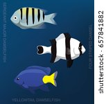 reef damselfish set cartoon... | Shutterstock .eps vector #657841882