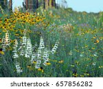 Roadside Wildflowers In Texas