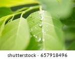 close up of a water drops on... | Shutterstock . vector #657918496