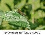 A Dragon Fly On A Leaf