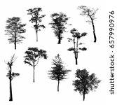 black tree silhouettes on white ... | Shutterstock . vector #657990976