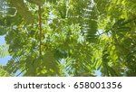 branches background | Shutterstock . vector #658001356