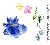wildflower iris flower in a... | Shutterstock . vector #658009246