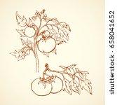 ripe raw big juicy fresh red... | Shutterstock .eps vector #658041652